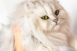 猫が抱っこを嫌がる理由とは?猫の嫌いな抱き方をしていませんか?