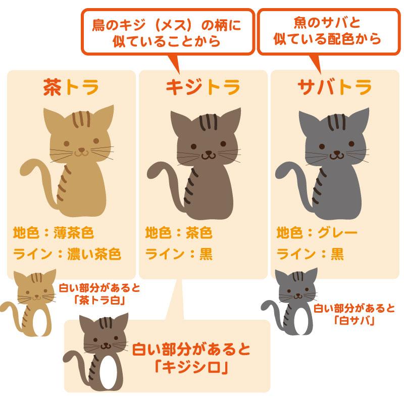 トラ猫の種類
