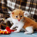 猫の遊びは手作りおもちゃで!お手軽♡DIYな手作りおもちゃベスト6