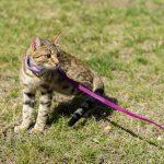猫と楽しくお散歩したい♡猫は人にちゃんとついてくる?犬に会った時は?
