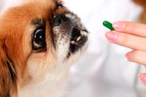 犬にも酵素は有効です!効果的にワンちゃんが酵素を取り入れる方法4つ