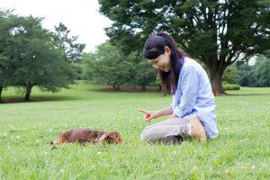 愛犬のことが嫌いになってしまう前に考えたい5つのこと