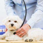 愛犬を抱っこしたら痛がった。もしかしたら椎間板ヘルニアかも!?