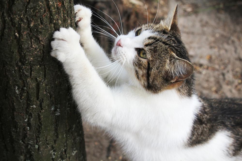 爪とぎをする猫の画像