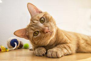 ネコちゃんのしつけ用スプレーを自分で作る!しつけスプレーをうまく利用しましょう!