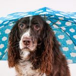 ジメジメした梅雨の時期に犬が病気になりやすいってほんと?原因と予防法