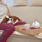 漢方で犬の病気は治る?漢方のメリットデメリットとは