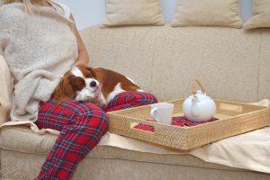 【獣医が教える】ペットのアンチエイジング・健康維持に最適な水素水