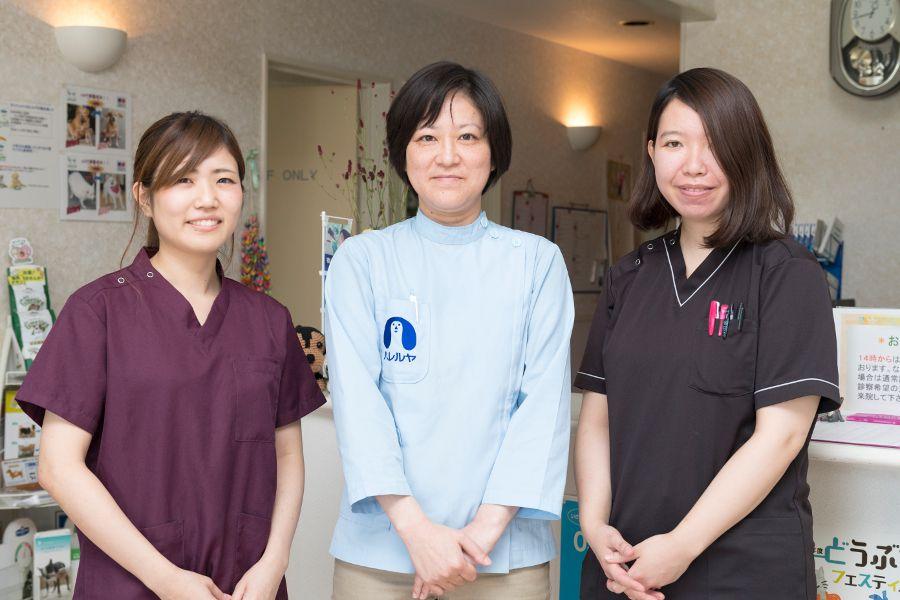 福岡市の動物病院10選!夜間診療など