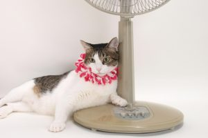【猫の留守番】猫の暑さ対策決定版!真夏はこれで乗り切ろう