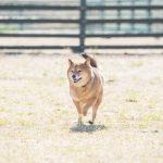 関東の犬が思い切り遊べる遊び場&ドッグラン♪おすすめスポット7選