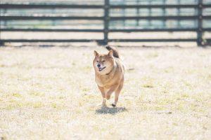 ワンちゃんと行こう!東京で犬と快適にお散歩できる公園14か所