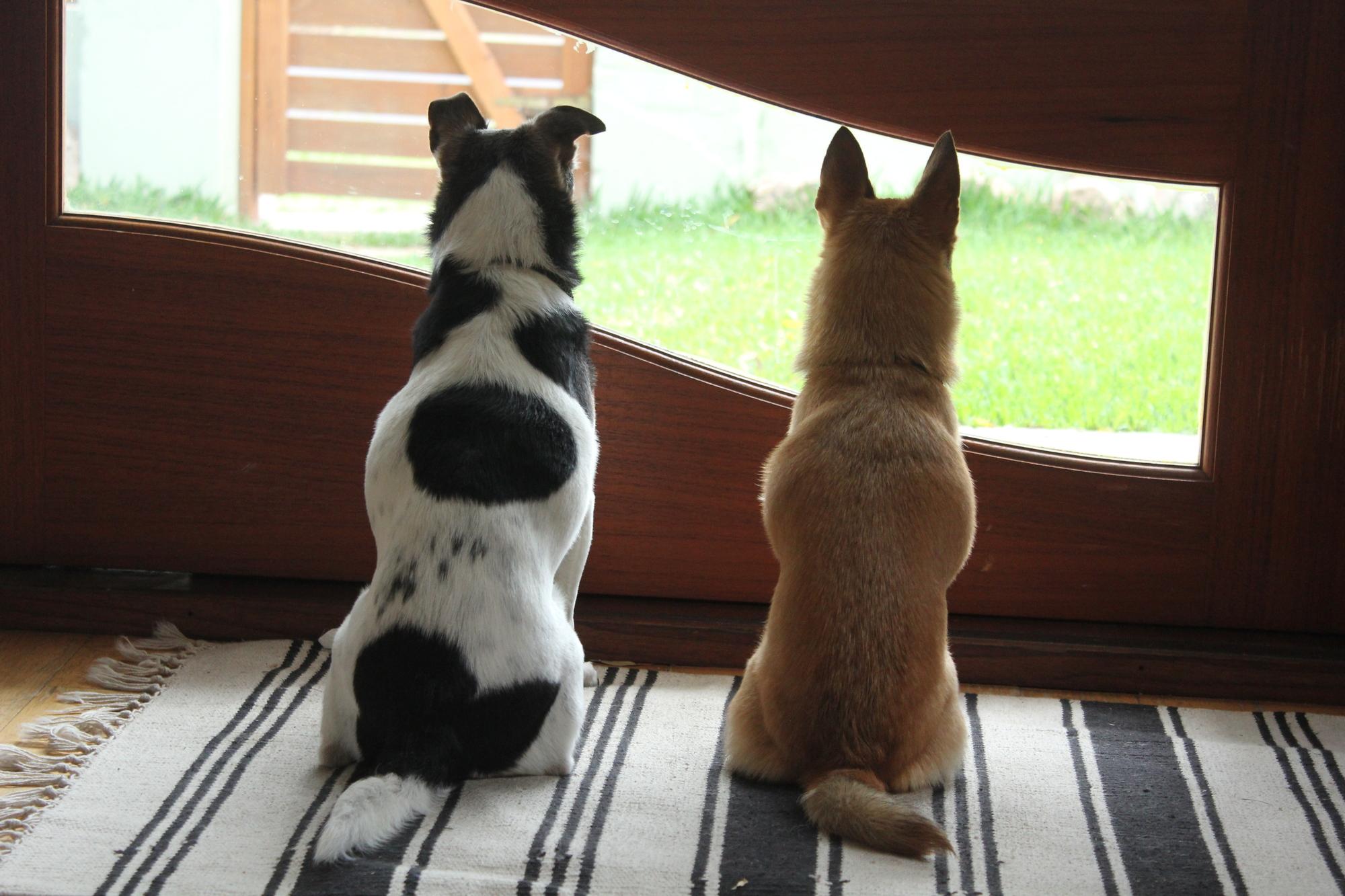 犬の留守番前後のおやつの与え方~帰ってからあげる?出発前にあげる?