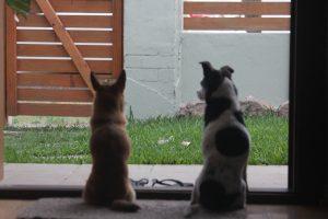 犬の留守番のしつけを上手にするための工夫4つ