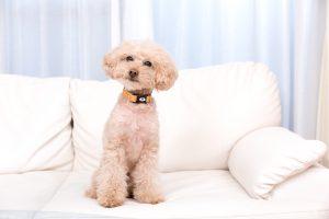 室内犬を飼う時に知っておきたい4つのコト。室内犬に向いている犬種は?