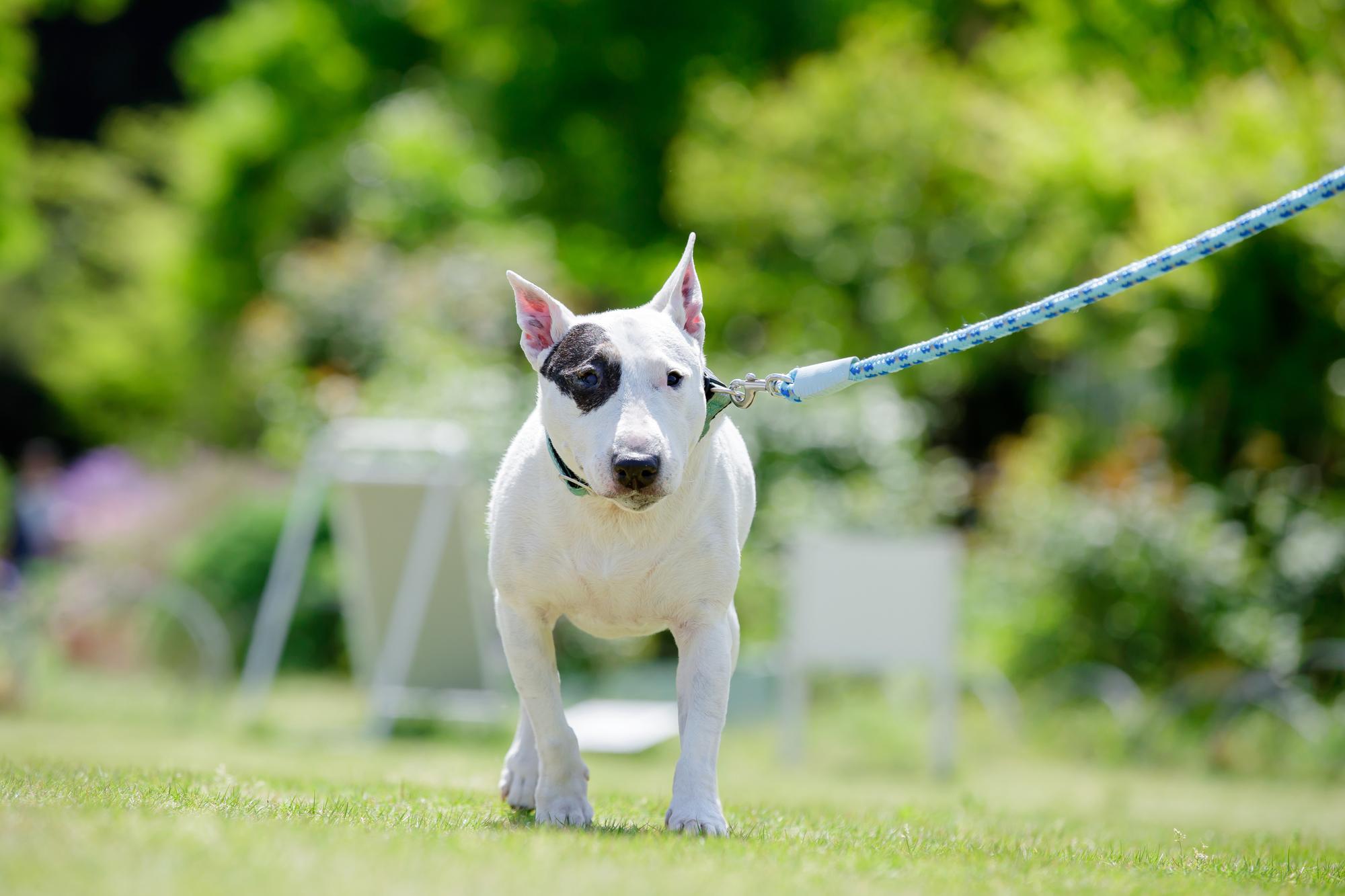 犬が散歩なしだとどうなっちゃうの?犬と散歩の重要性~ポイントまとめ