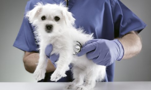豊島区でおすすめの動物病院3選!夜間対応可能施設あり