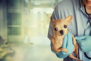 府中市で評判の動物病院3選!うさぎなど小動物診療あり