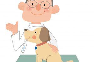 【獣医師監修】犬にも健康診断があるって知ってる?犬の健康診断のメリット・デメリット