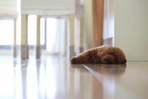 グッズを使って乗り切ろう!ペットの室内の暑さ対策~エアコン&扇風機