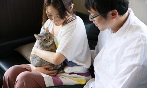 猫のペット保険はどこがいい?保険なしの場合の平均診療料金とは?