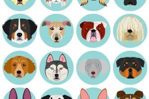 【獣医師監修】中・大型犬の人気種類ランキング!1位と2位は狩猟犬・レトリーバー!