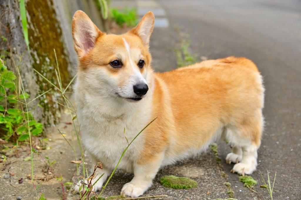 種類 犬 の