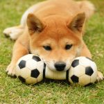 ワンちゃんが興奮?!夢中で噛む♡犬の遊びでおすすめ道具7選