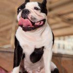 【獣医師監修】犬のよだれが大量の時にチェックするべき6つの事~犬はよだれが多いもの