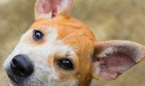 【獣医師監修】愛犬の車酔いの原因とその対処方法について