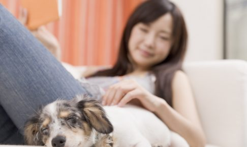 一人暮らしで犬を飼って癒されたい人急増中!最低限必要な条件は?