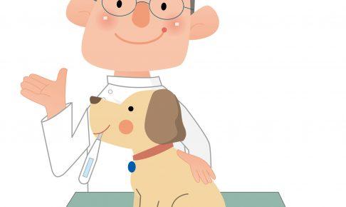 7歳を過ぎても入れるペットの保険はどこ?高齢になると保険料も上がる?