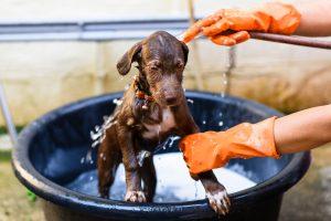愛犬と一緒にお風呂に漬かりたい!バスタブに入れても大丈夫?