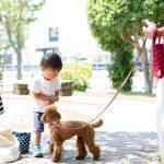 犬の散歩用バッグはどう選ぶ?選び方のポイントとおすすめバッグ