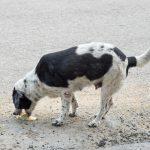 【獣医師監修】病気の可能性も!犬が拾い食いで吐く場合にチェックするべき5つのこと