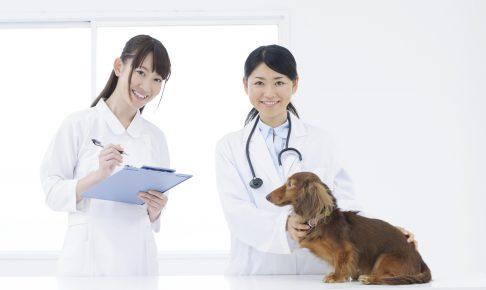 【獣医師監修】犬の健康診断ではどんな事ができる?診断項目と料金について