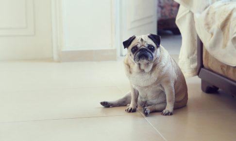 犬の肥満対策のためのダイエットフード~評判のよいペットフードは?