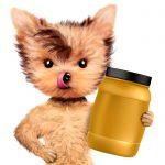 犬の健康食品ってどんなのがあるの?与えても安全?犬の健康食品のリスト