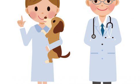 ペットの保険ランキング【2017】手厚い補償の会社は?