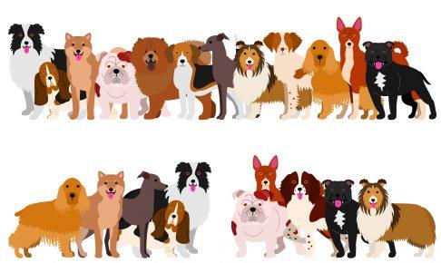 小型とは違った魅力にある!中型犬の人気種類ランキングベスト10