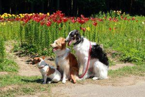 飼いやすい犬の種類を知りたい!~小型・中型・大型サイズ別種類