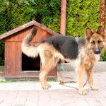 今、犬は外飼いより室内飼いが主流なのは何故?外での犬の飼い方とは