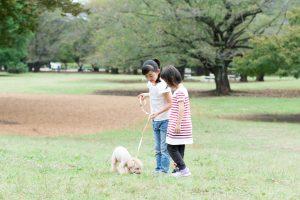 お散歩中の犬の拾い食いをやめさせる!拾い食いに効果的なしつけ方法