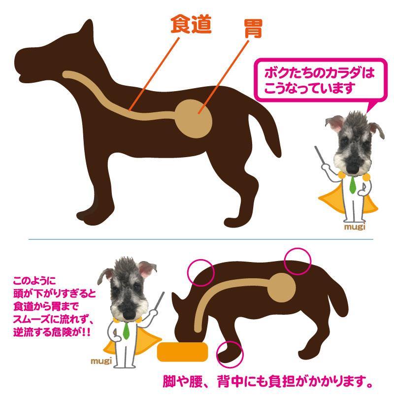 ワンちゃんの身体の構造(食道と胃)