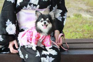 ちょっと待って!犬を花火大会に連れて行くのは危険かも。