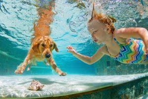 関東のおすすめドッグプール7選。愛犬と夏の思い出をつくろう!