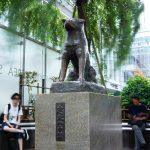 渋谷駅周辺でオススメの動物病院5選!