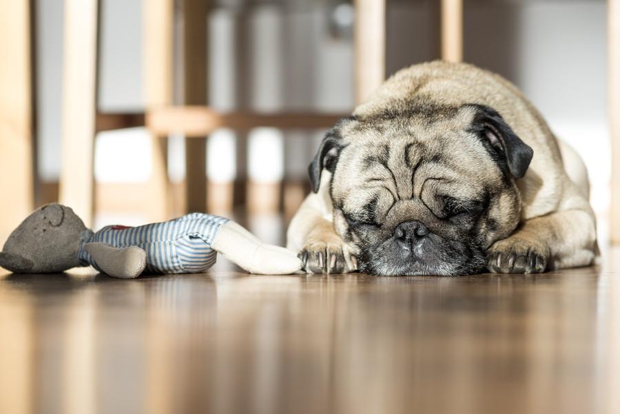 犬はすぐ飽きてしまう生き物です・・・。