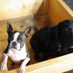 愛犬と温泉に行こう!お出かけ準備とおすすめ宿施設(まとめ)