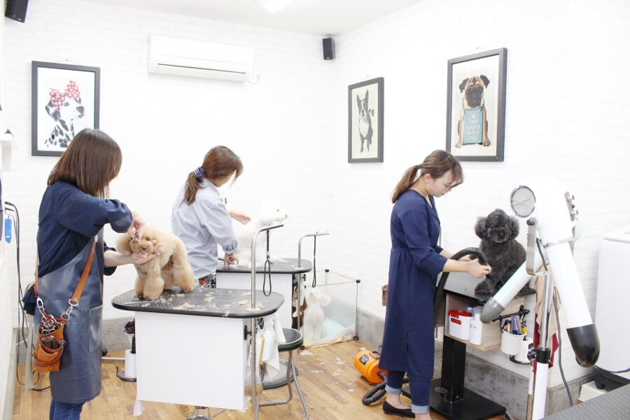 APRICOT TAIL Groomingstudio